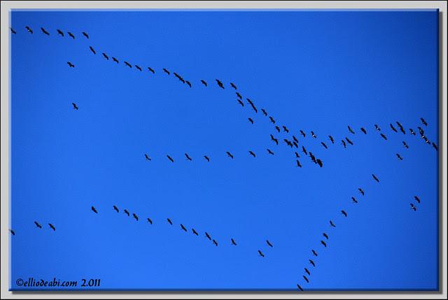 3 migración de grullas