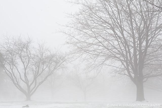 Foggy_Winter_Landscape-04