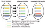 Thumbnail of Derivation of genes segments of novel influenza A(H3N2) viruses isolated from humans, United States, 1990–2011. TR-SIV, triple reassortant swine influenza virus.
