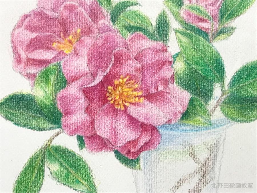 塗らずに描く色鉛筆画の描き方 Vol1椿の花編 北野田絵画教室
