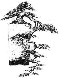 Kengai Bonsai