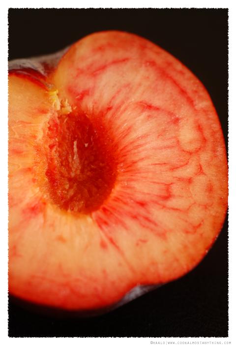 star ruby plum© by Haalo