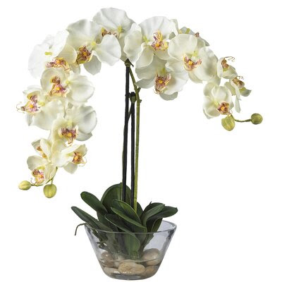 Nearly Natural Phalaenopsis Silk Orchid in White with Glass Vase \u0026 Reviews  Wayfair