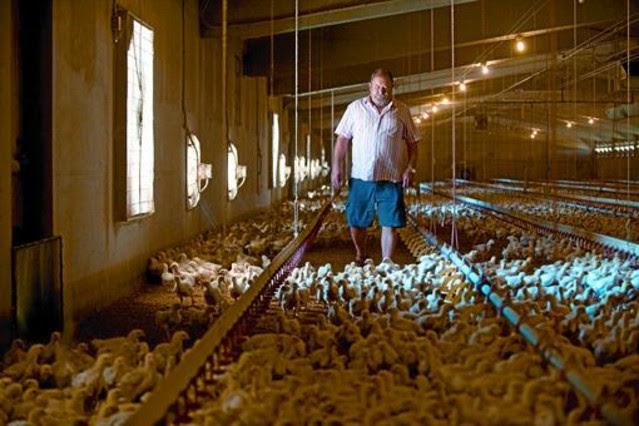 El ramader Joan Serra, divendres passat, a la seva granja avícola d
