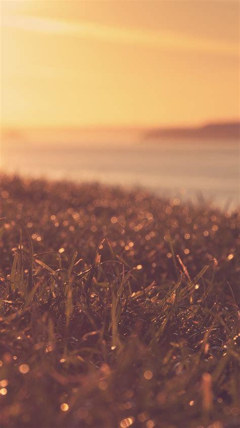 sunset view wet grass plants iphone wallpaper iphone