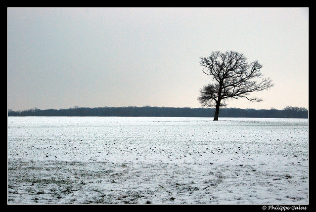 L'arbre dans la plaine