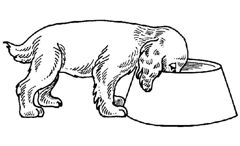 116 malvorlagen hund zum ausdrucken  coloring and malvorlagan