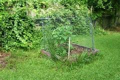 garden2011june