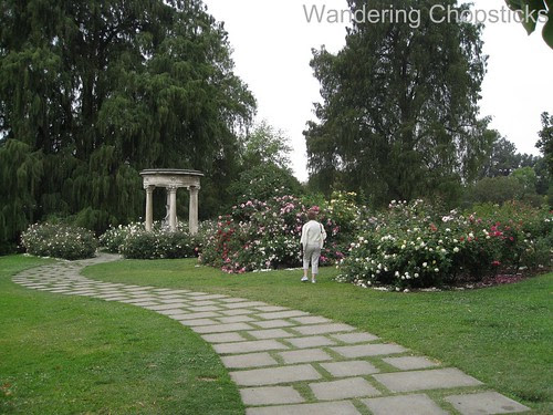 The Huntington Library, Art Collections, and Botanical Gardens (Rose Garden) (Spring) - San Marino 6
