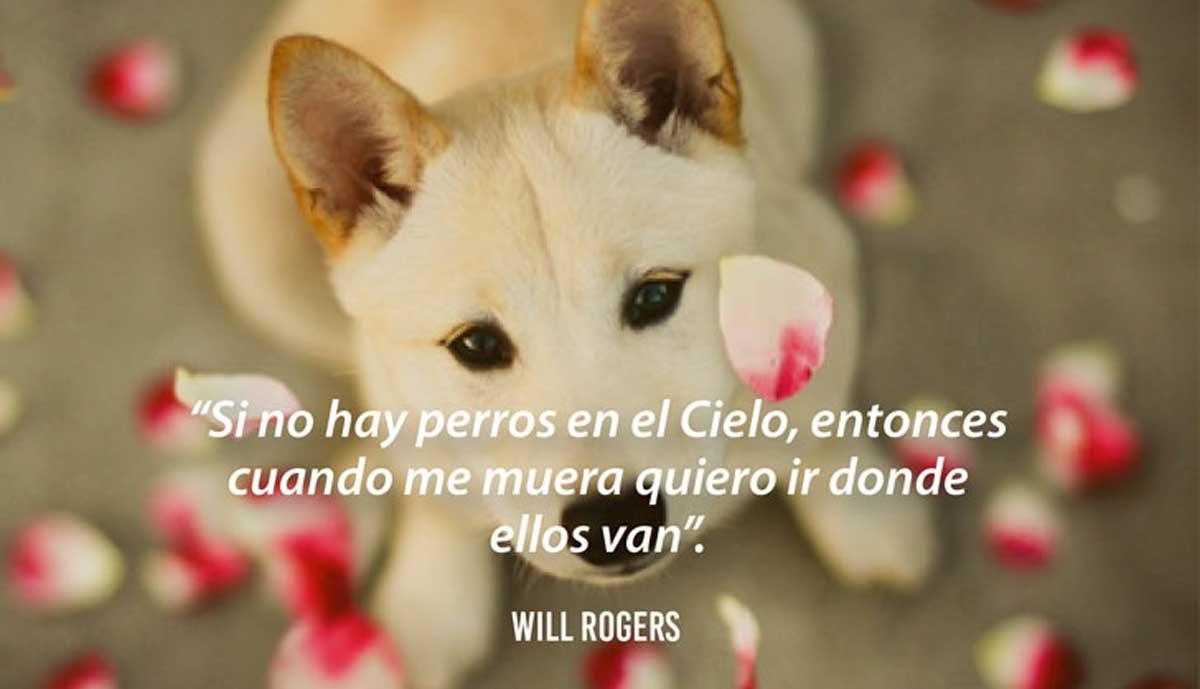 Estas Sabias Frases Dedicadas A Los Perros Demuestran Lo