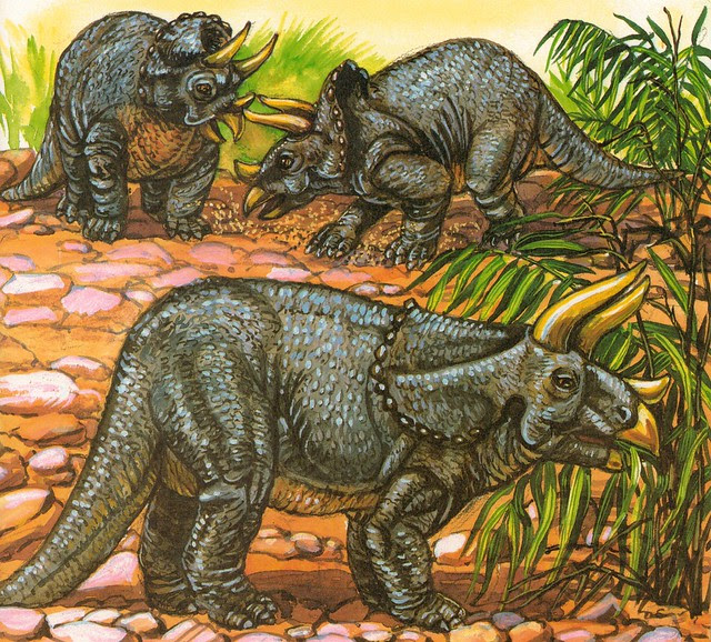Trio of Triceratops