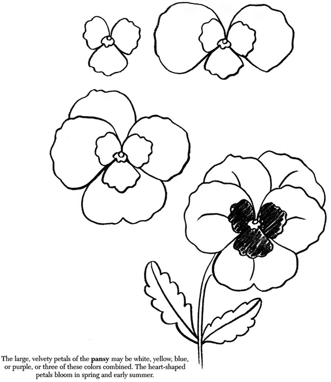 Drawing Ideas Easy Flowers Max Installer