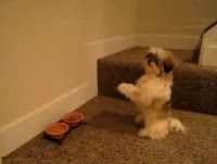 """Vídeo: Cachorro que """"ora"""" antes das refeições faz sucesso na internet"""