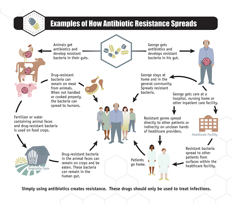 Examples of how Antimicrobial Resistance Spread image