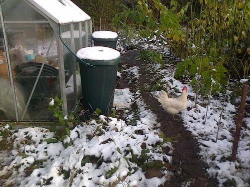 Snow on allotment Oct 12