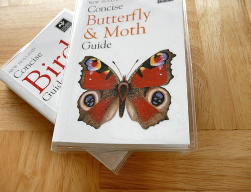 buterfly book