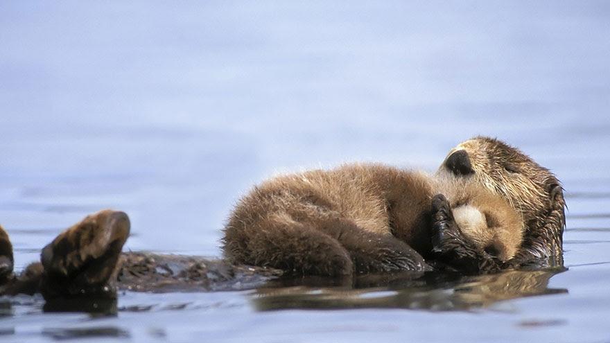 http://www.boredpanda.com/cute-animal-parenting/?image_id=animal-parents-17-2.jpg