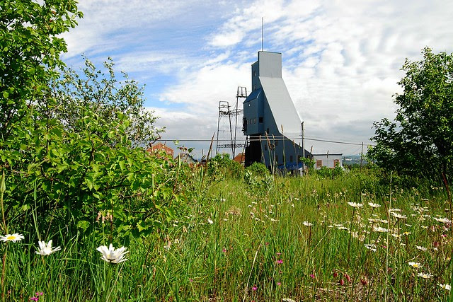 The Quincy #2 shaft as seen through a field of brush and wildflowers.