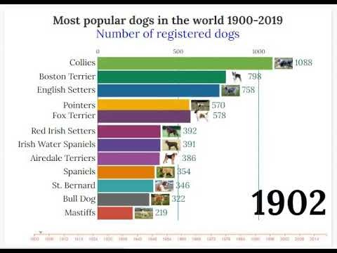 TOP 10 MOST POPULAR DOGS IN THE WORLD (1900 - 2019)