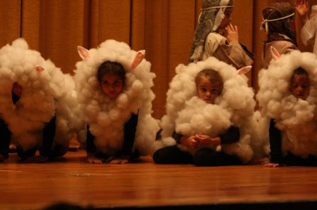 pageant sheep