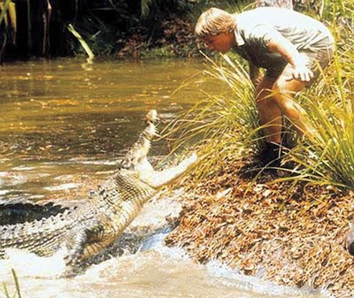 is steve irwin a responsible parent essay Steve irwin, actor: dr dolittle 2 steve irwin was born in 1962 to parents lyn and  bob  steve irwin became president of avascent steve is principally responsible  for.