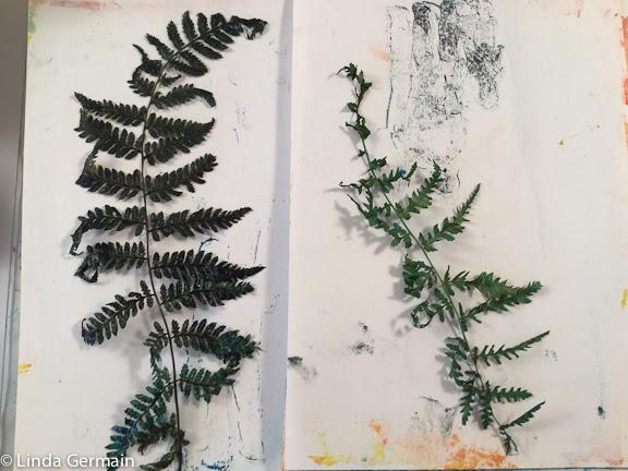 ferns for gelatin printmaking
