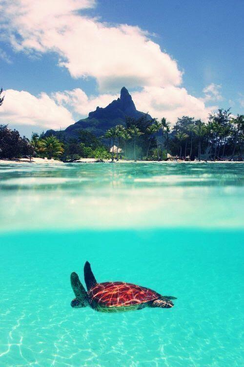 Bora bora   Places to Visit   Pinterest