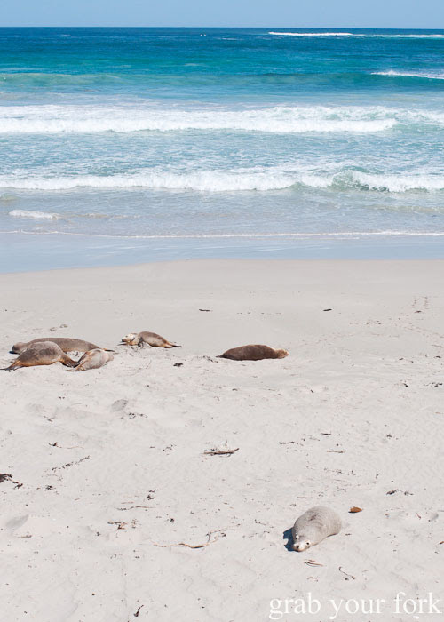Sea lions lying on the beach at Seal Bay Conservation Park, Kangaroo Island