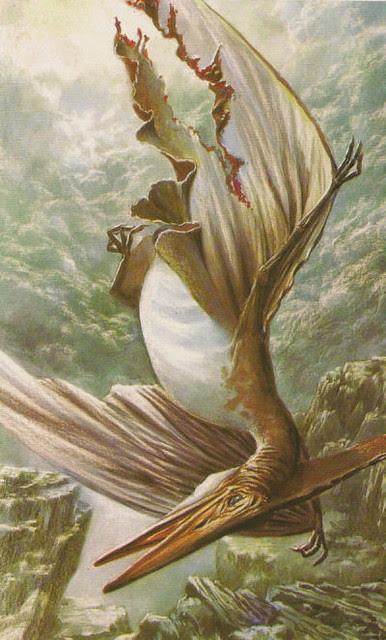 OLIVIER_1981_Pteranodon