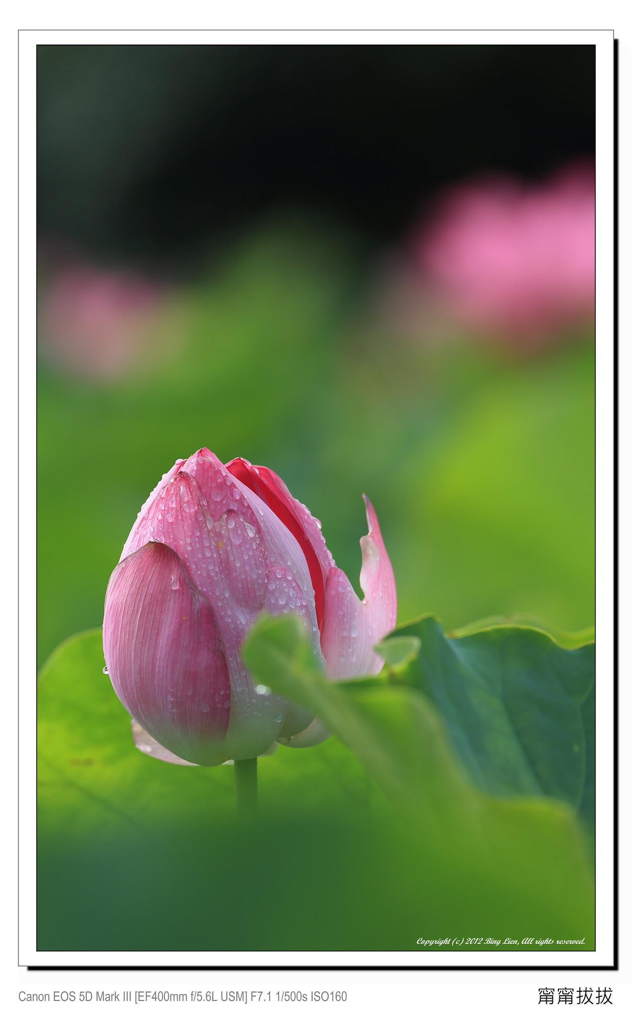 frame_BING4639