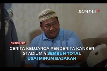 Batang Bajakah Kalimantan Penyembuh Kanker Stadium 4