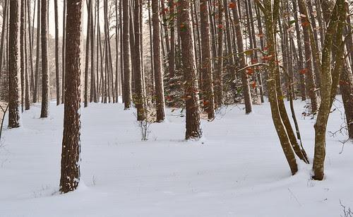 Loblolly Woods