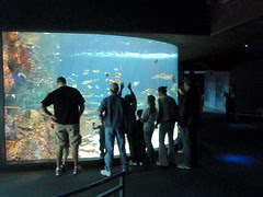 people at the tropical tank