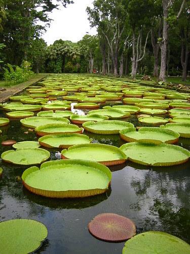 Pamplemousse Garden, Mauritius