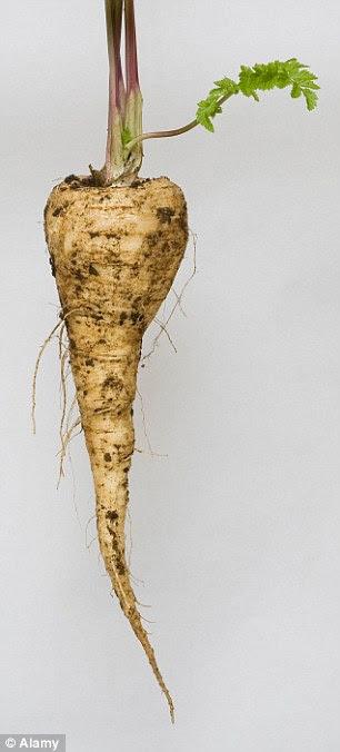 A parsnip