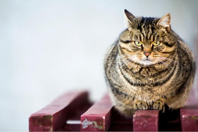 ¿A qué le temen los gatos?