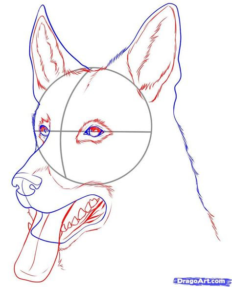 images  easy sketches  german shepherd dogs