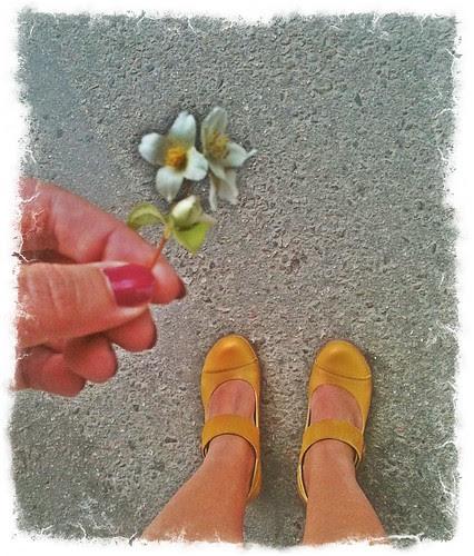shoe per diem june 21, 2011 - mock-orange and yellow