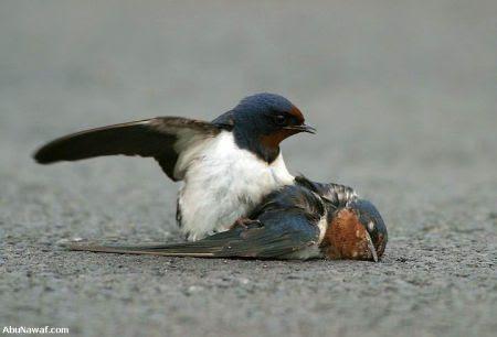 http://www.muruganad.com/fw/images/bird3.jpg
