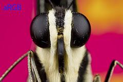 butterfly aRGB