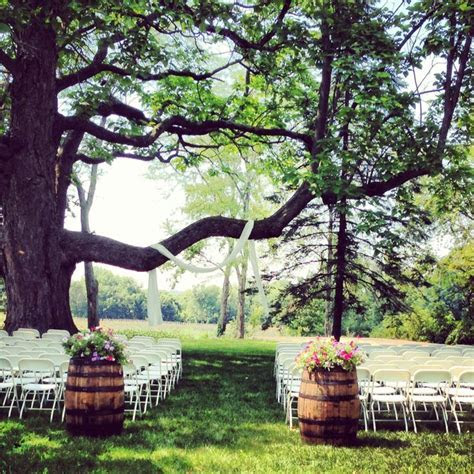 our heritage tree set up for a ceremony   Hidden Vineyard
