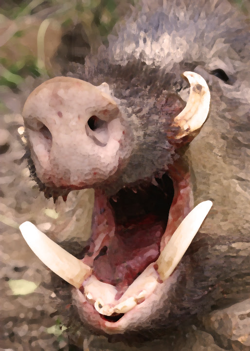 Savage boar
