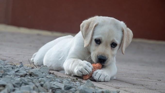 Los alimentos que tu perro nunca debe comer