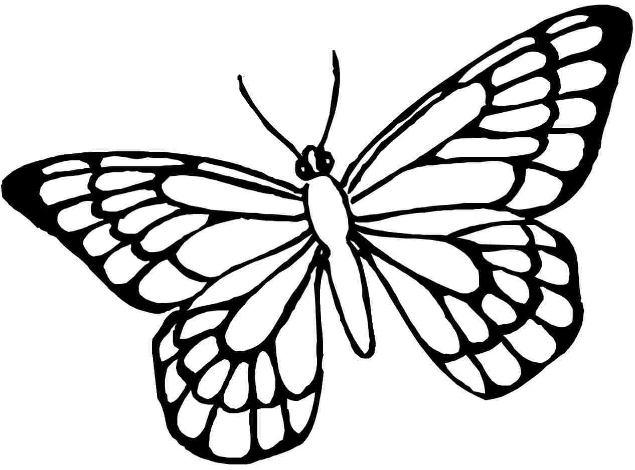 Butterfly Coloring Pages | Free download on ClipArtMag