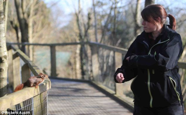 Call the Flying Squad: Pickpocketing squirrel jumps through the ...