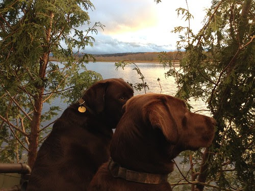 Duck Blind Buddies