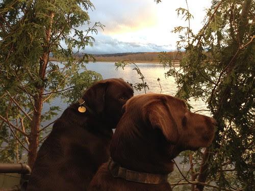 Duck Blind Buddies