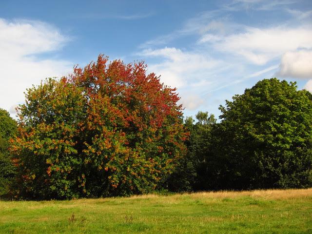 Trees on Tumulus Field, Hampstead Heath