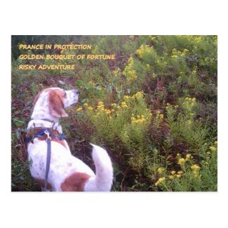 Hound Dog Goldenrod Bouquet Postcard