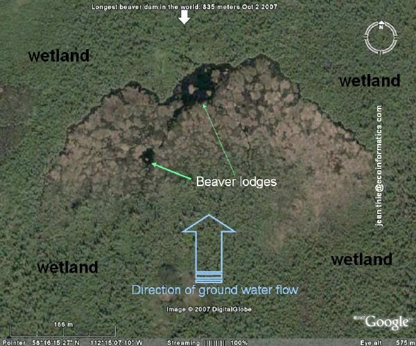 Worlds longest beaver dam found with google earth google product the direction of waterflow is indicated by the blue arrow waterflows subsurface through a wetland treed muskeg with stunted tamarack and black spruce publicscrutiny Images